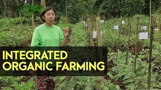 Integrated Organic Farming System: Farmers Group in Lucban Quezon into Organic Farming