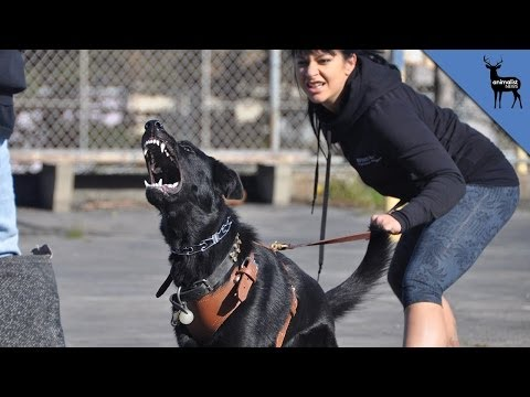 What Makes a Dog Aggressive?