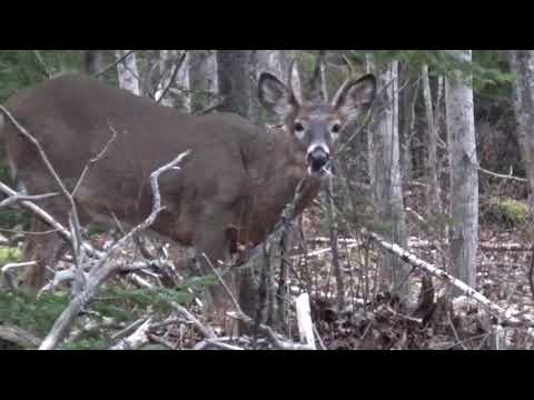 2018 Nova Scotia General Deer Hunt