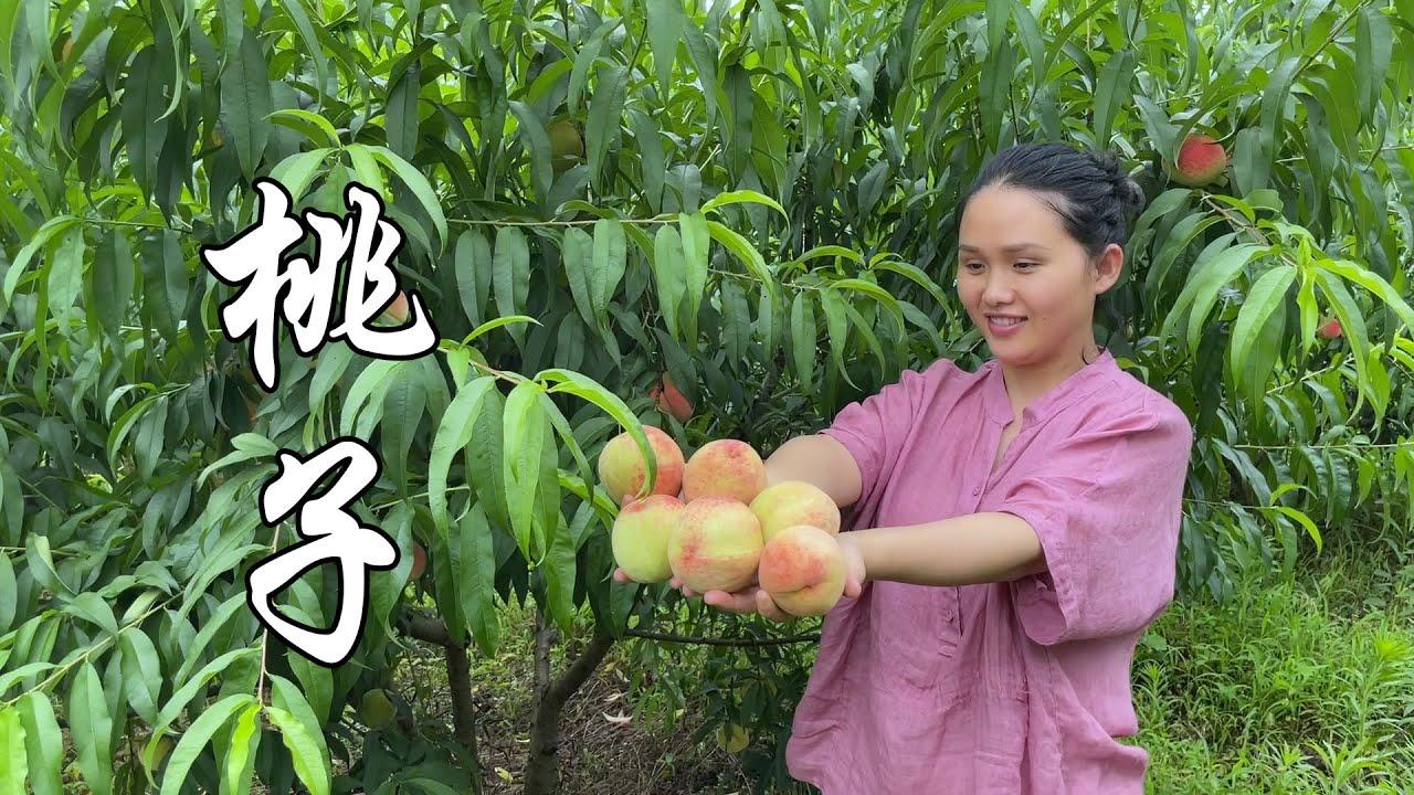 两年前嫁接的桃树,第一年可以吃桃子,又脆又甜