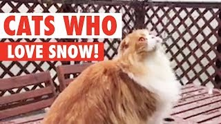 Cats See Snow For The First Time | Let It Snow!