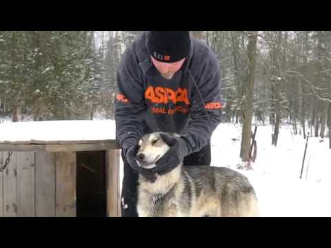 EXCLUSIVE VIDEO: ASPCA Wolf Dog and Horse Rescue in Wisconsin