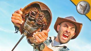 Extremely Bizarre Creatures! thumbnail