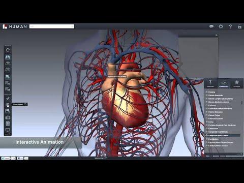 libro Atlas de anatomía humana Netter gratis from YouTube · Duration:  2 minutes 17 seconds