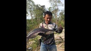 Рибалка в Камбоджі,ស្ទូចត្រីឆ្តោរ