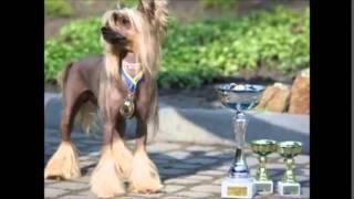 """Vita da Cani""  Sfilata canina amatoriale"