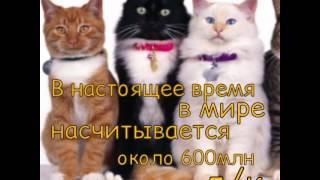 Информация: Кошки#1/ПЖ