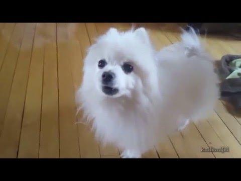 brand new 2016 text to speech dog source