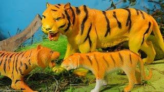 МЛАДШИЙ БРАТ. Мультфильмы про животных для детей. ТИГРЫ