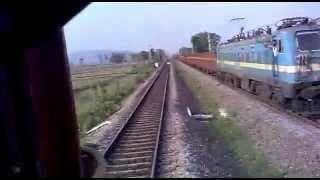 train hits a cow