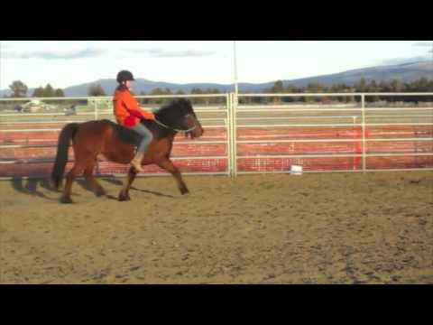 Icelandic Horse for Sale - Arena Work, Ridden by Emma, age 12