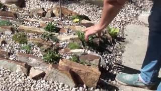 Альпийская горка своими руками. Коллекция растений Л И  Калашниковой