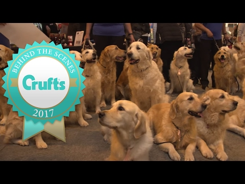 Thumbnail: Around the Show on Day 3 | Crufts 2017