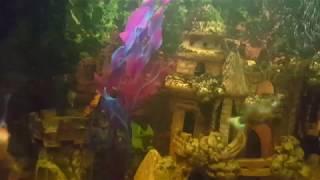 Искусственные водоросли для аквариума c aliexpress