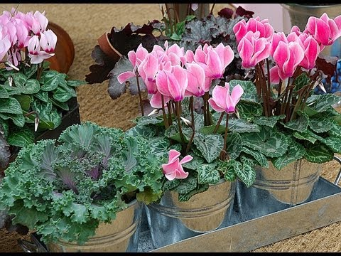 Garder les mini plantes d 39 int rieur fleuries youtube for Les plantes