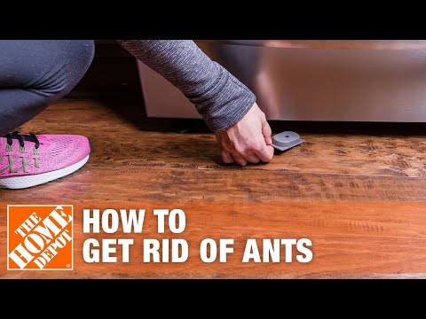 6 Easy Ways to Get Rid of Ants and Prevent Ant Infestations