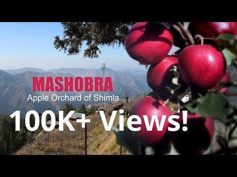 Mashobra: An Apple orchard of Shimla
