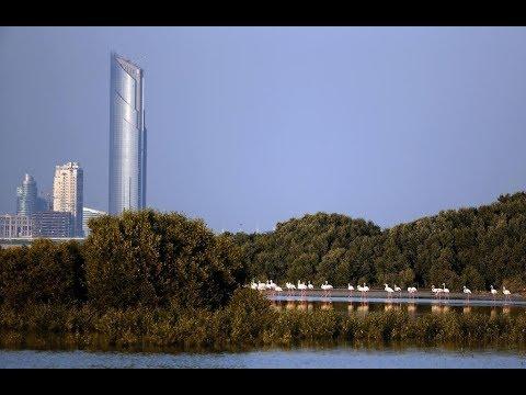 Dubai, Ras Al Khor Wildlife Sanctuary(Flamingo's)