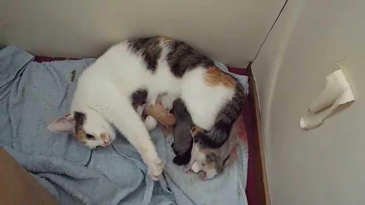 vandaag geboren kittens drinken bij moederpoes
