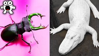 Top 10 Most Expensive Animals In The World