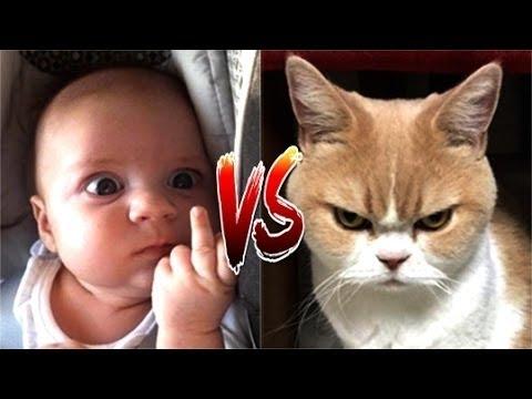 爆笑 , 面白 , 赤ちゃんの対猫面白い猫のコンパイルパート2