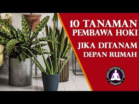 10 Tanaman Pembawa Hoki Di Depan Rumah, Menurut Fengshui dan Primbon Jawa
