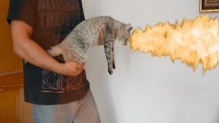 parodia gato metralleta vs gatobazuca vs gatolanzallamas