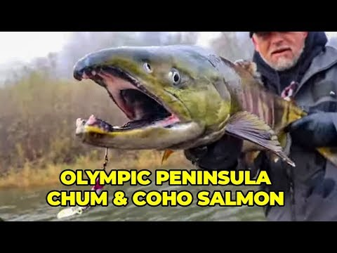 Olympic Peninsula Chum And Coho Salmon Fishing