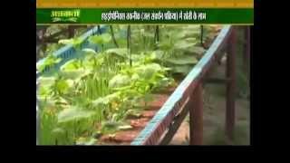 हाइड्रोपोनिक्स तकनीक से खीरा की खेती