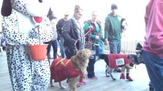 Rehoboth Beach Sea witch Dog parade 2013