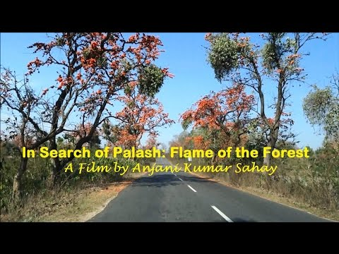 In Search of Palash: Flame of the Forest