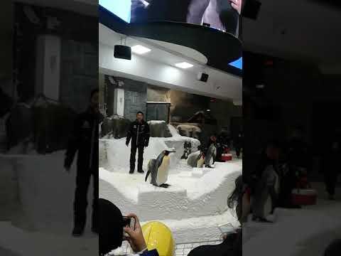 2019 Dubai #SKIDUBAI #All about penguins
