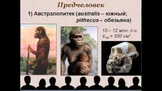 Эволюция человека презентация по биологии