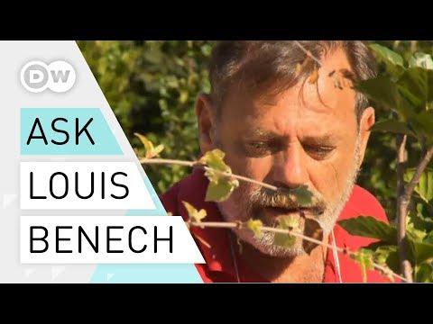 Designing for Versailles - Louis Benech | Landscape design | Landscape architect