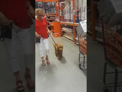 Dog Trainer Naples Florida Leica At Home Depot Dog Training Session Naples Top Dogs Youtube