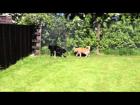 Rick & Roby (Rehomed!)