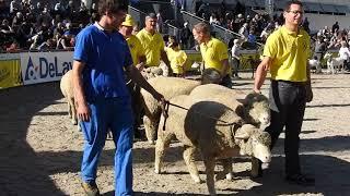 日替わりで行われるテーマ、この日はTag der Schafe und Ziegen(羊とヤ...