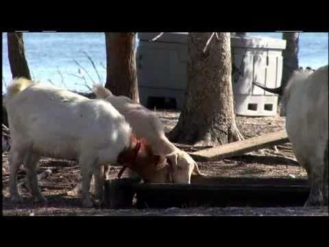 Goat Island - Murrells Inlet, SC