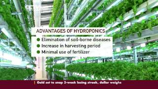 Hydroponics Revolutionize Farming in Kenya