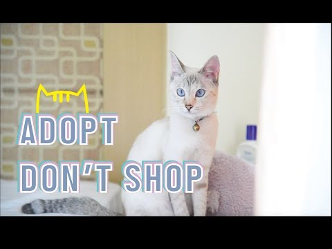 """Hazel's Vlog: MY LIFE WITH CATS """"ADOPT, DON'T SHOP"""" 