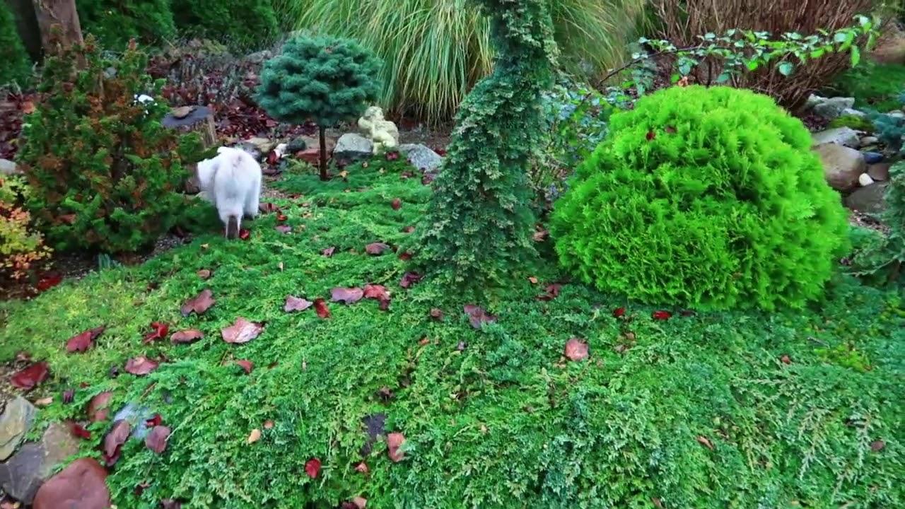 Z czym łączyć byliny, trawy ozdobne