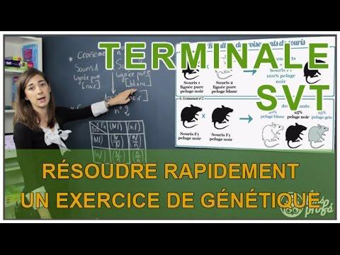 Résoudre rapidement un exercice de génétique - SVT Terminale S - Les Bons Profs
