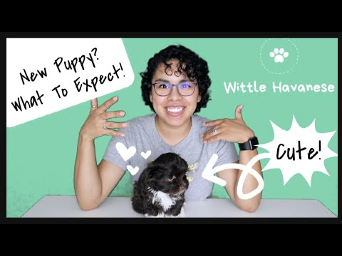 Bringing Your Puppy Home l Havanese (What To Expect)