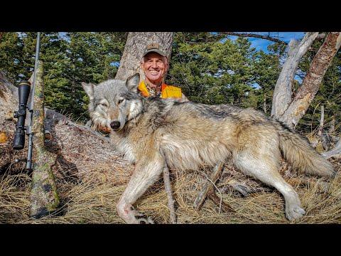 I SHOT A WOLF! (Self-Filmed)