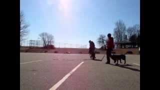 Behavior Modification - Previously Aggressive Dogs