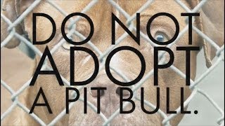 Anti Pit Bull Superbowl Commercial is Wrong.