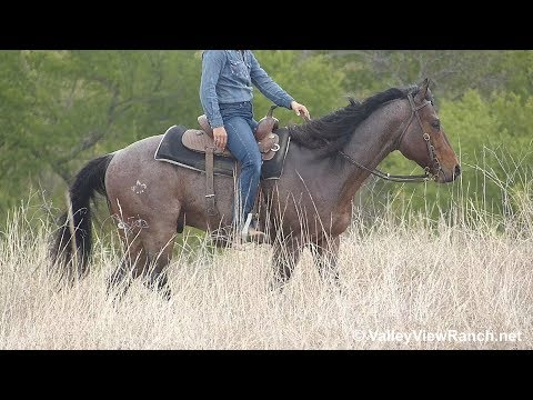 A Freak Of Fling - Trail Riding! - ValleyViewRanch.net