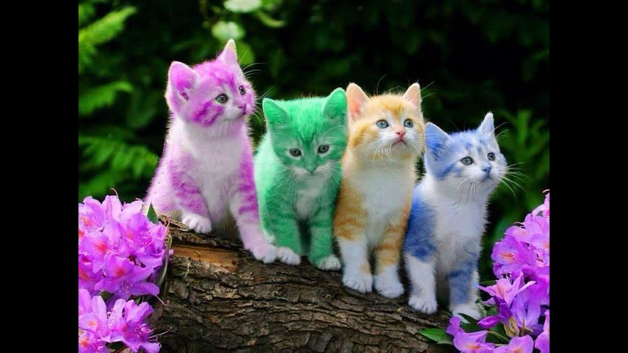 Funny Cats Compilation - 2016 A Funny cats - YouTube Pictures Of Cats