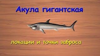 Русская Рыбалка 3.99 Акула гигантская - локации и точки заброса(В этом видео я рассказываю на каких локациях ловится акула гигантская и популярные точки заброса. JOIN QUIZGROUP..., 2015-02-07T12:19:08.000Z)