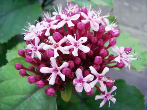 type de plantes - YouTube